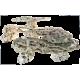Natural Shelf Shape MarcoRocks (au kg)